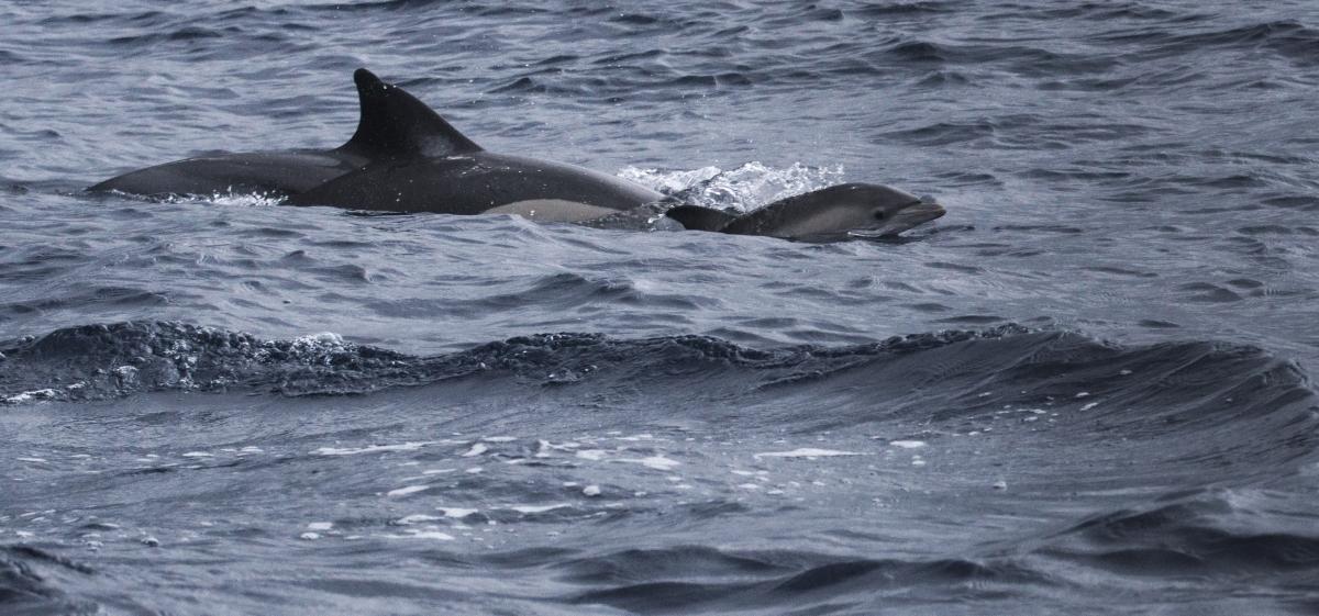 Drie dolfijnen